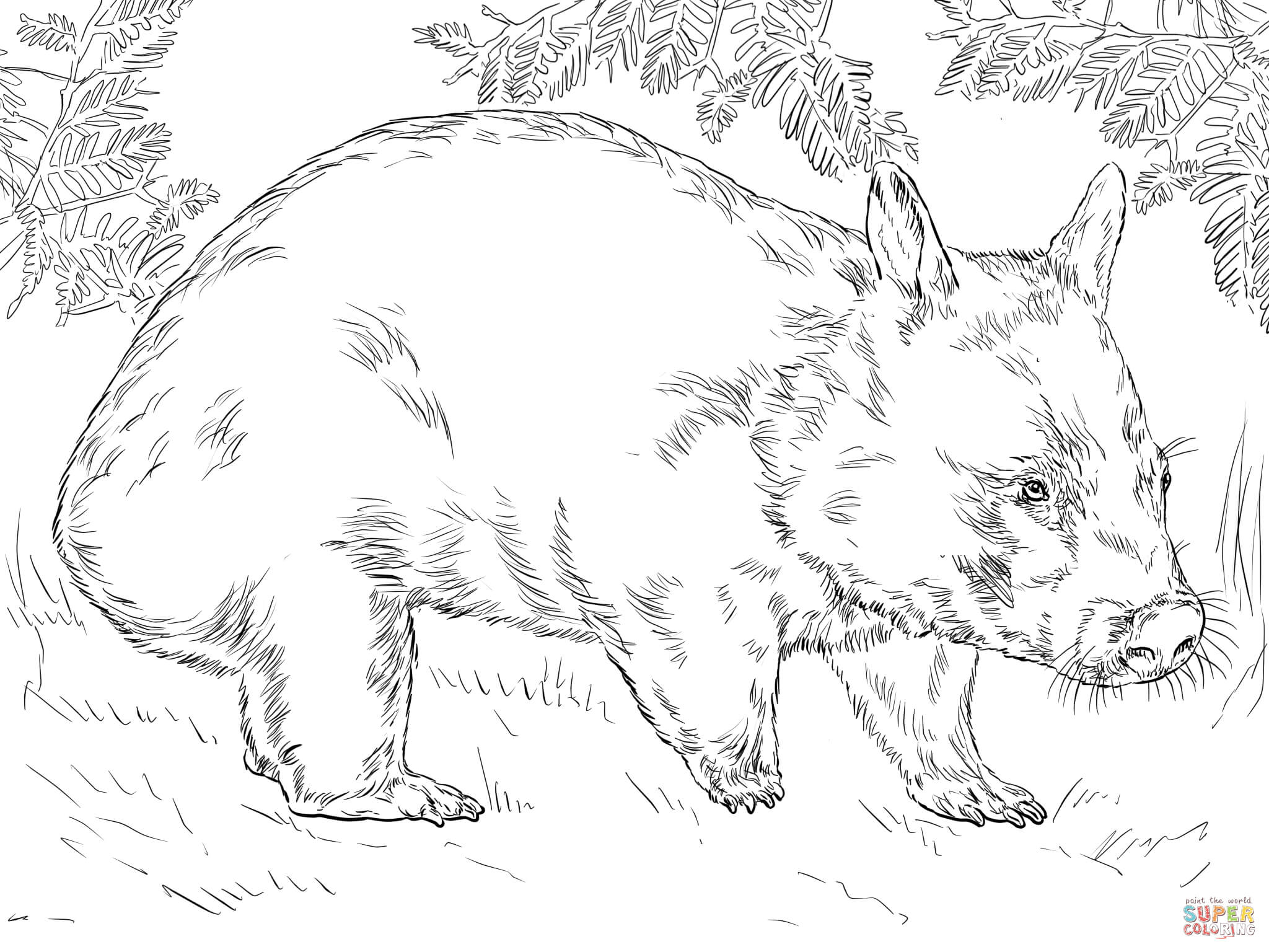 wombat colouring pages 26 best wombats images on pinterest wombat photo art colouring pages wombat