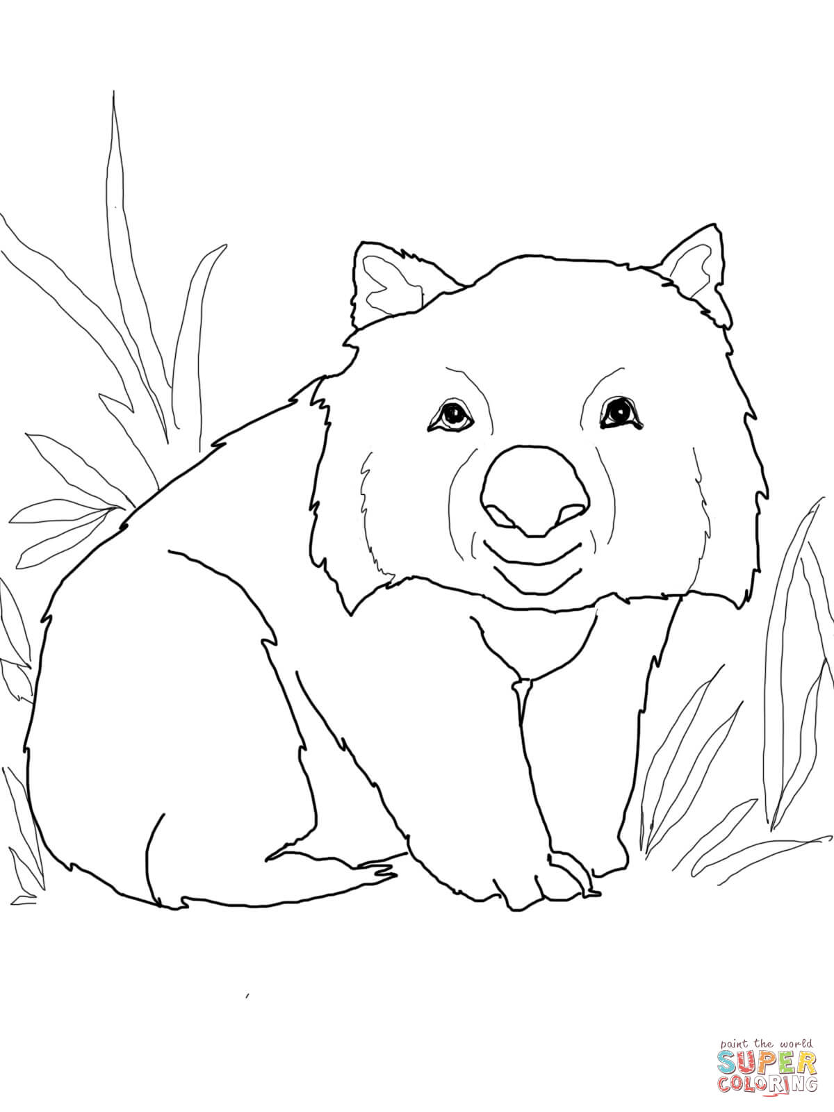 Wombat colouring pages