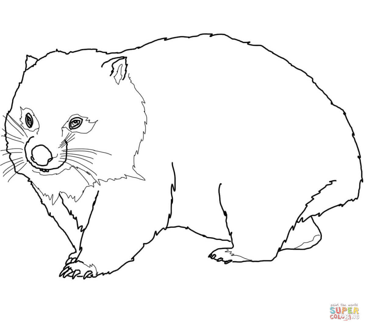 wombat colouring pages common wombat coloring page free printable coloring pages pages colouring wombat