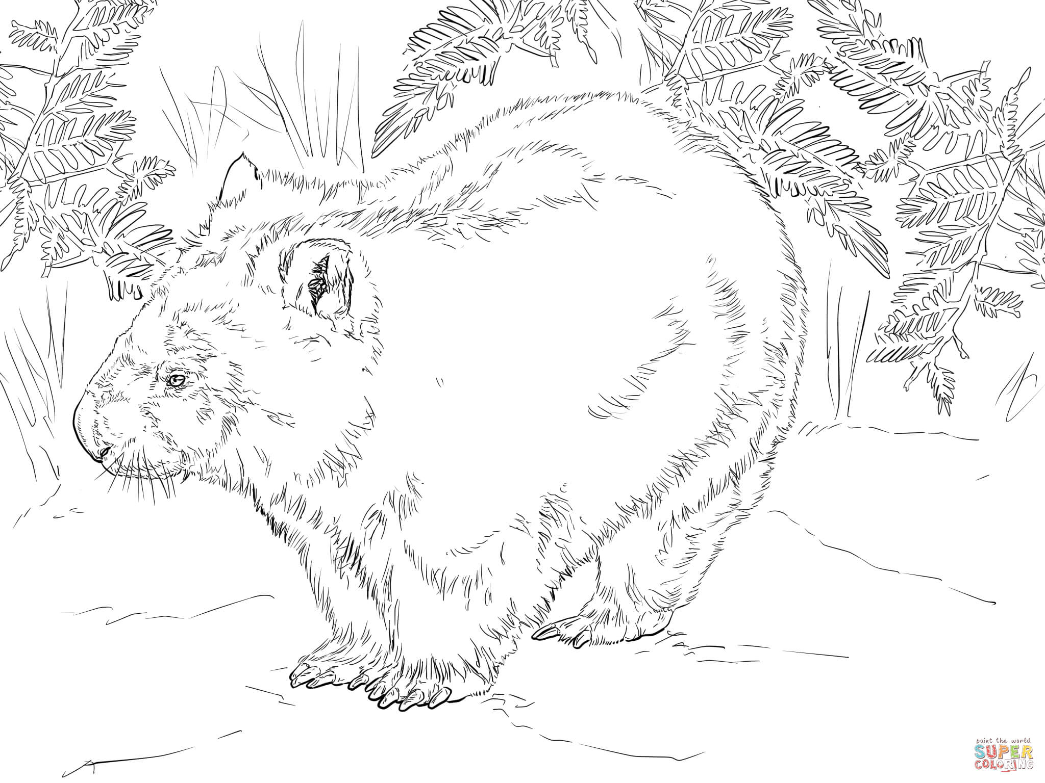wombat colouring pages cute wombat coloring page free printable coloring pages colouring wombat pages