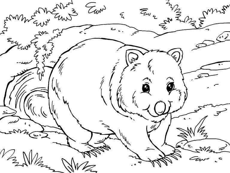 wombat colouring pages dancing wombat coloring page free printable coloring pages wombat colouring pages