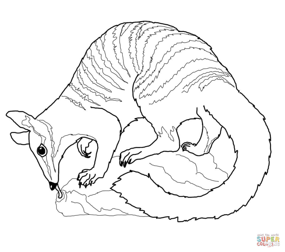 wombat colouring pages download wombat coloring for free designlooter 2020 colouring pages wombat