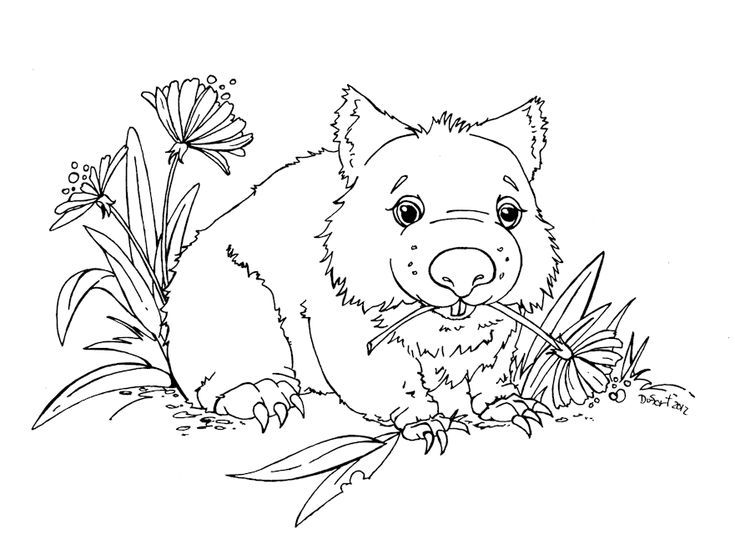 wombat colouring pages wombat bear coloring page free printable coloring pages pages colouring wombat