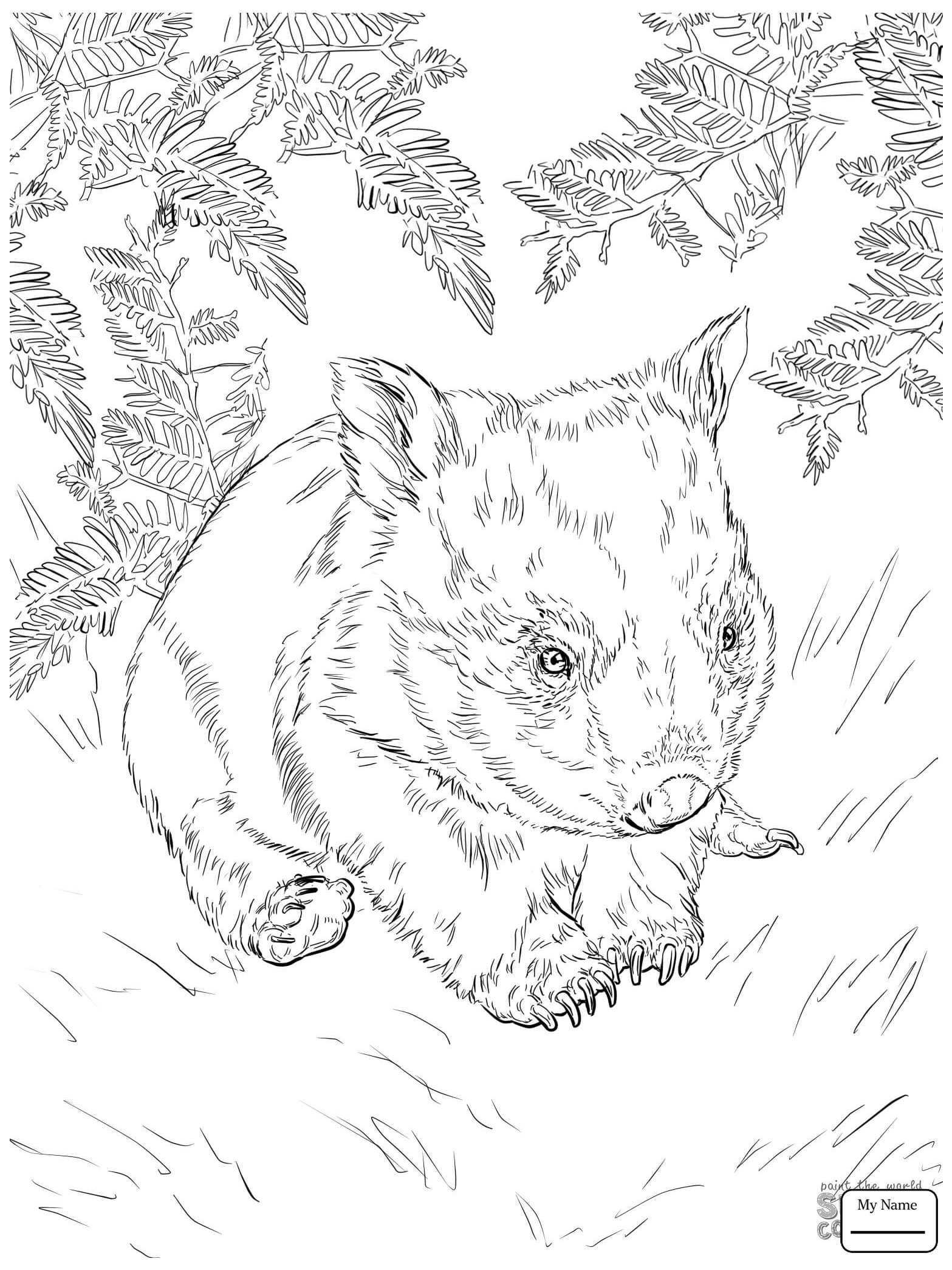 wombat colouring pages wombat cartoon wombat coloring page animals town pages wombat colouring