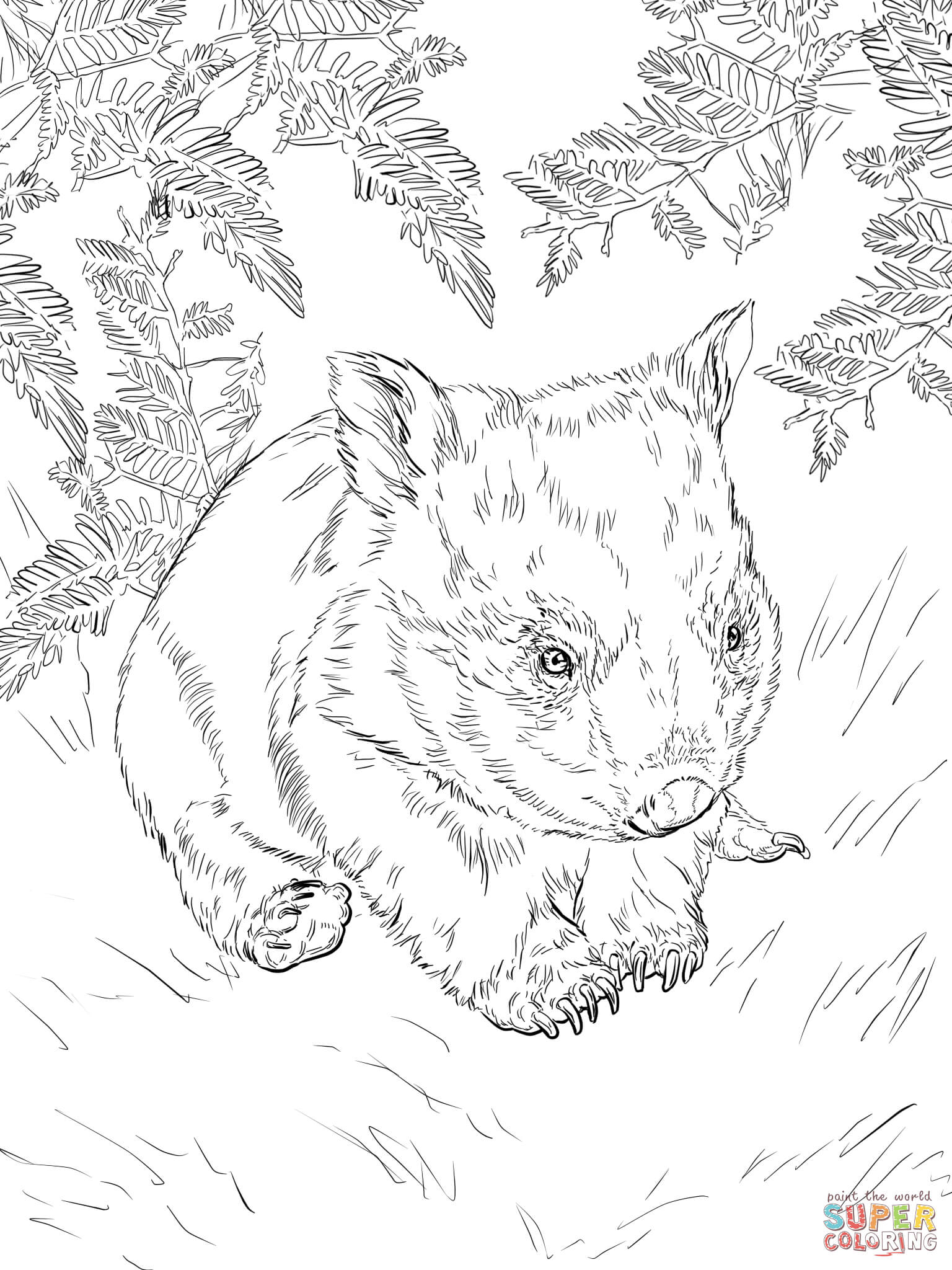 wombat colouring pages wombat coloring page animals town animals color sheet pages colouring wombat