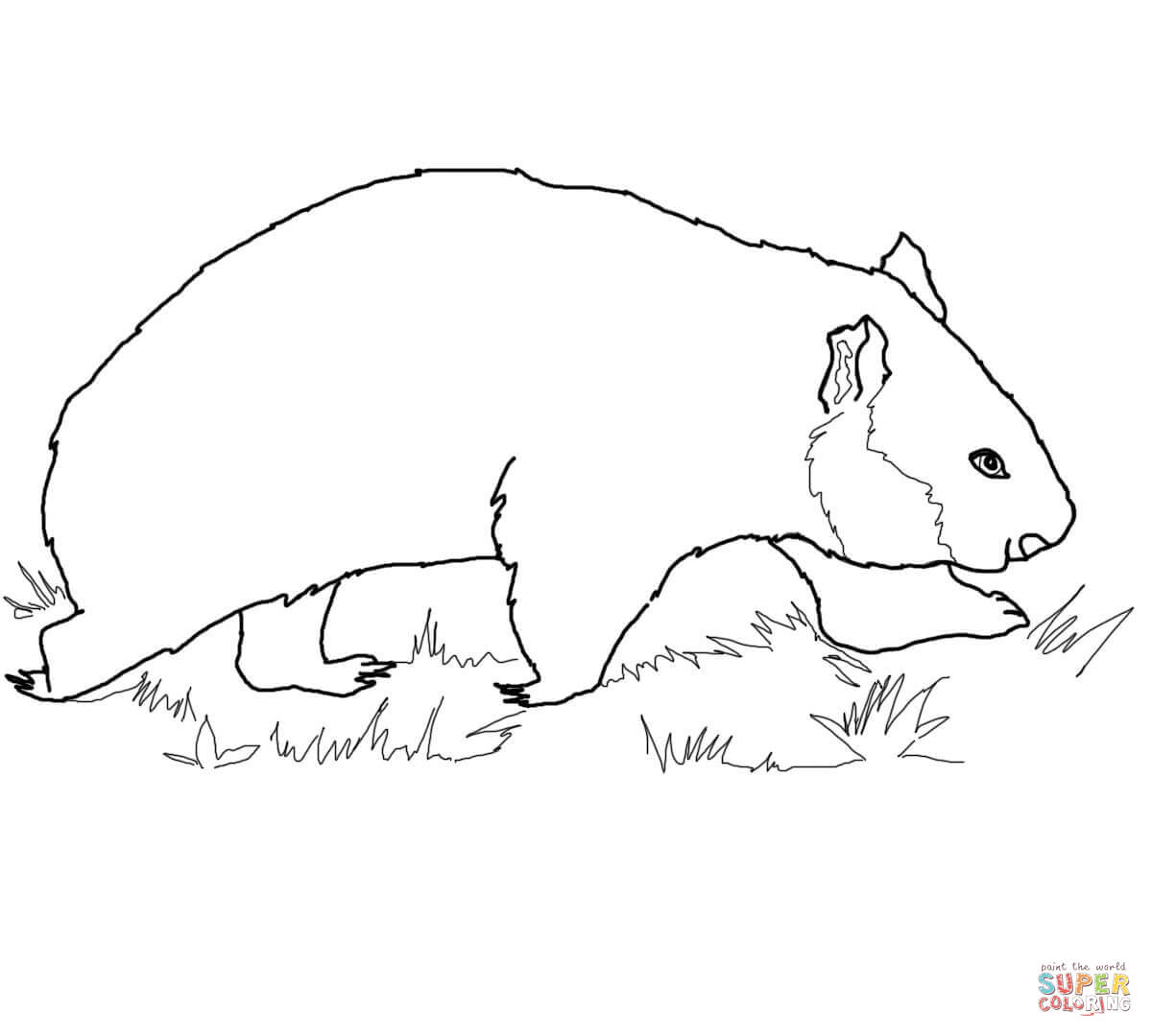 wombat colouring pages wombat coloring page coloring pages 4 u colouring pages wombat