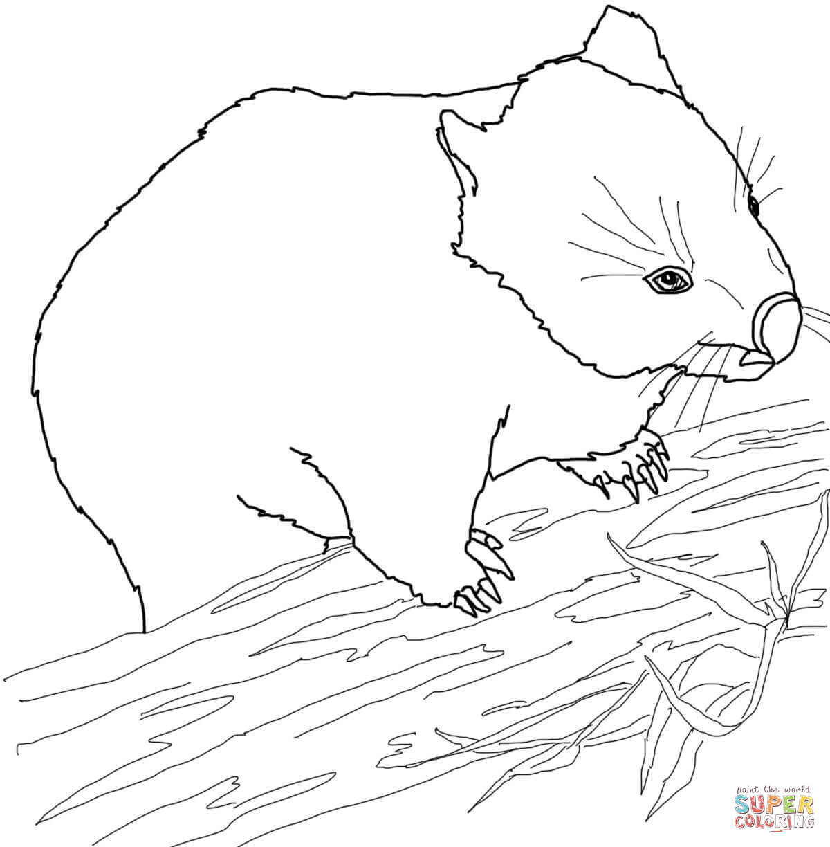 wombat colouring pages wombat coloring page free printable coloring pages pages colouring wombat