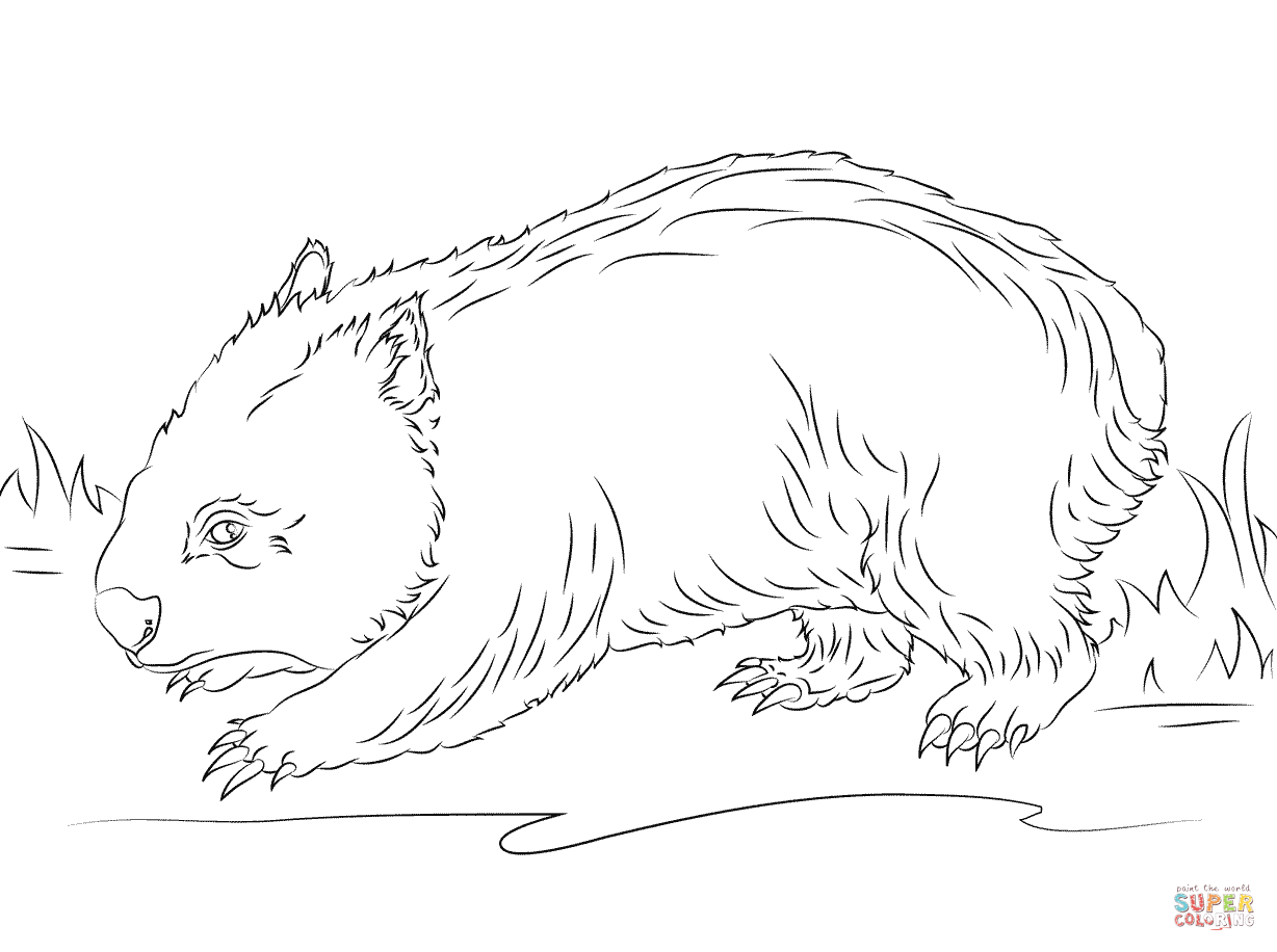 wombat colouring pages wombat drawing at getdrawings free download wombat colouring pages