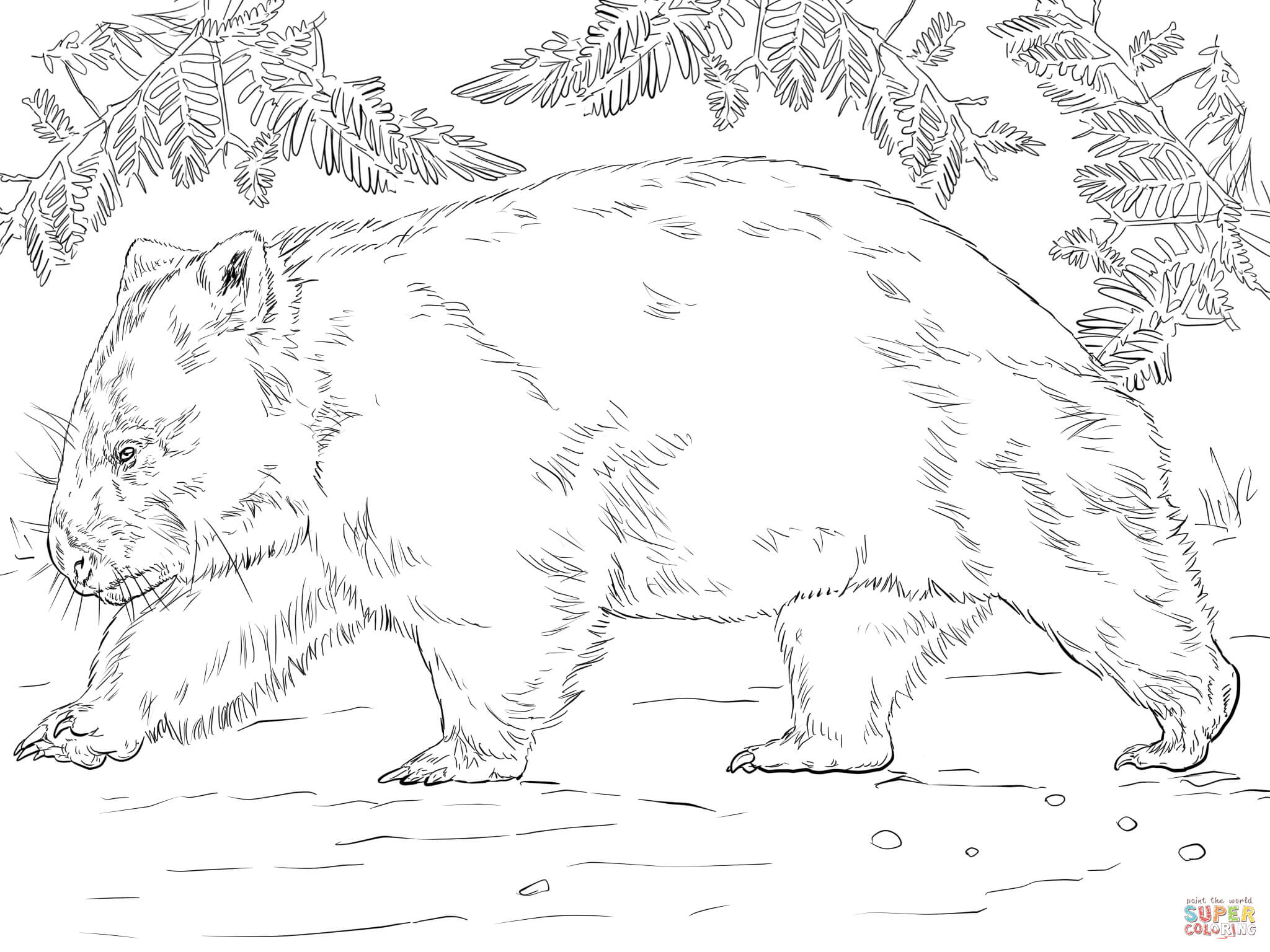 wombat colouring pages wombat from australia coloring page free printable colouring wombat pages