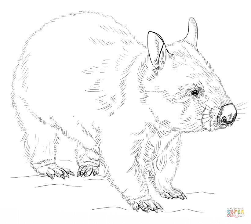 wombat colouring pages wombat pages colouring wombat pages colouring