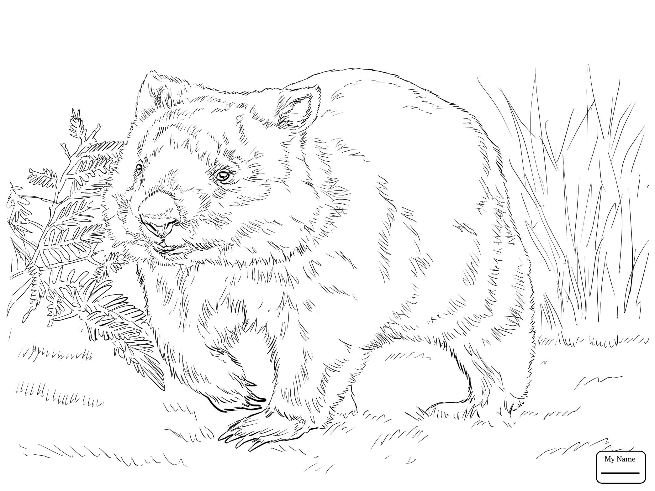 wombat colouring pages wombat scene colouring page coloring pages wombat pages colouring