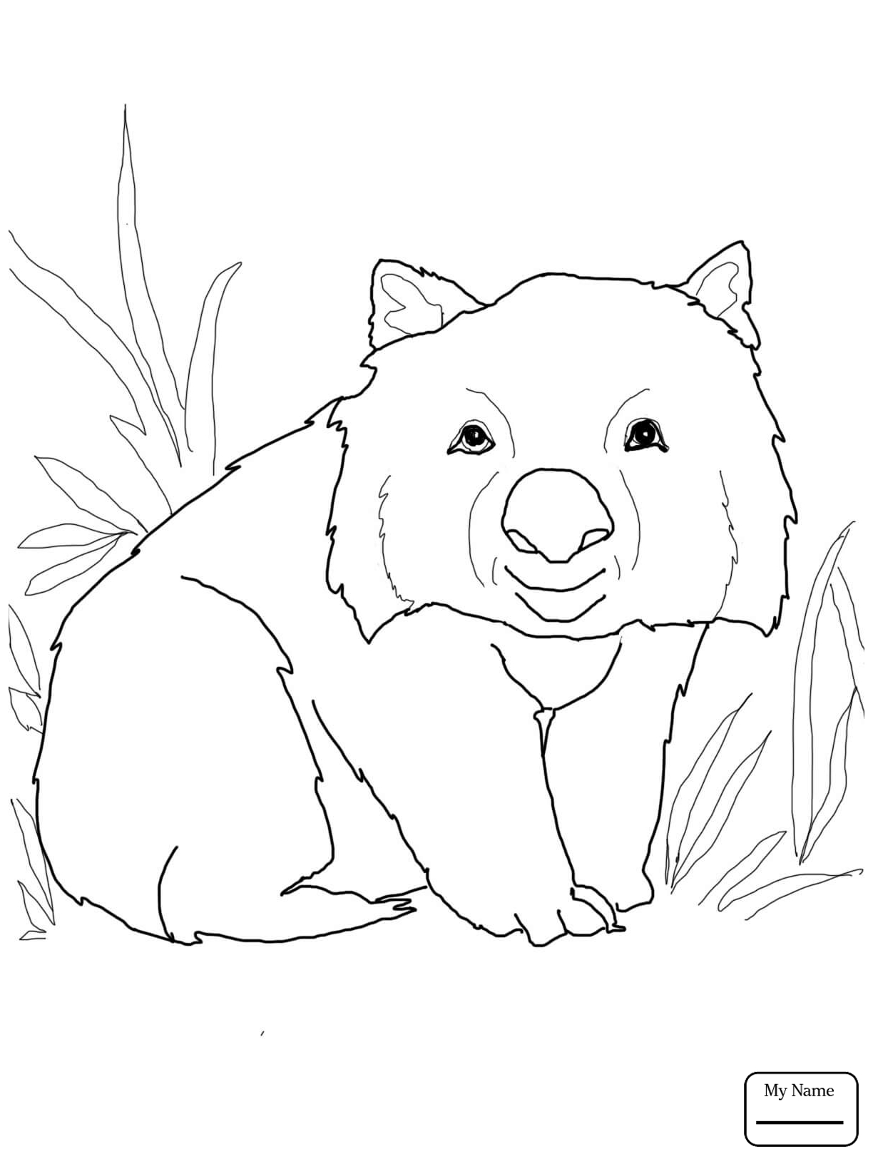 wombat colouring pages wombats wombat pages colouring
