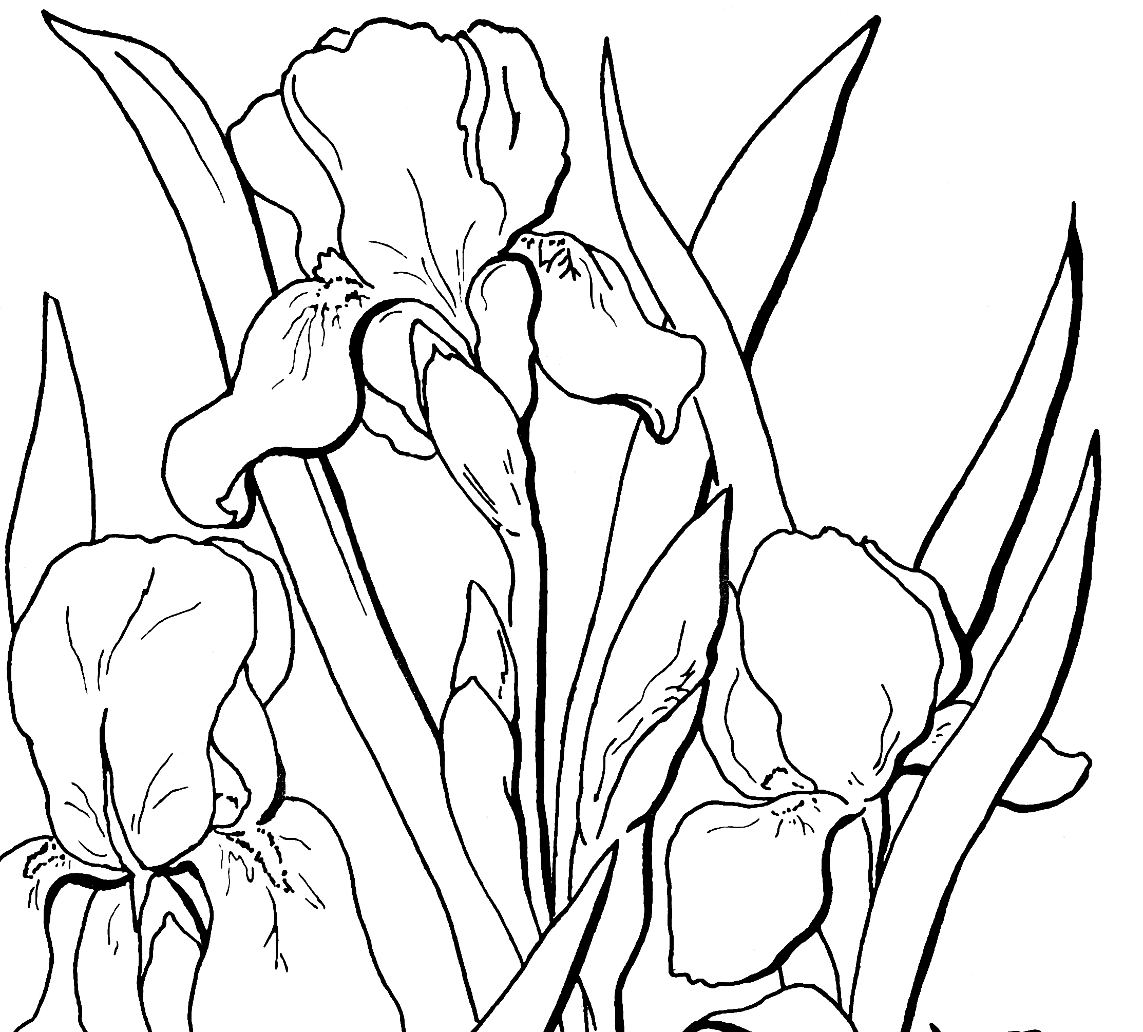 wwwfree coloring pagescom coloring pages for adults pdf free download wwwfree coloring pagescom