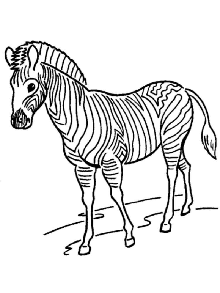 zebra print coloring pages free printable zebra coloring pages for kids zebra pages coloring print