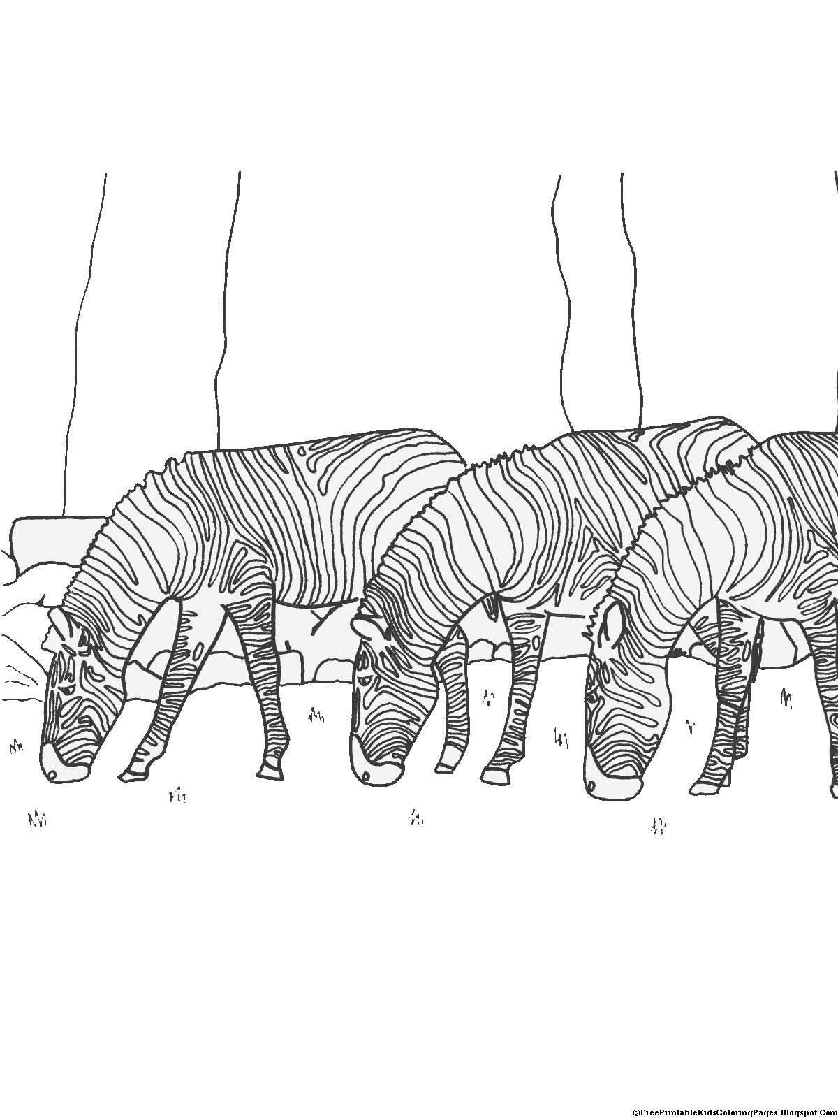 zebra print coloring pages stallion zebra coloring page download print online zebra coloring print pages