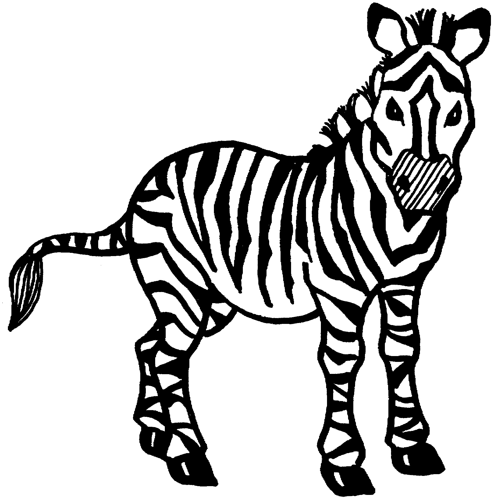 zebra print coloring pages zebra coloring pages to download and print for free pages zebra coloring print