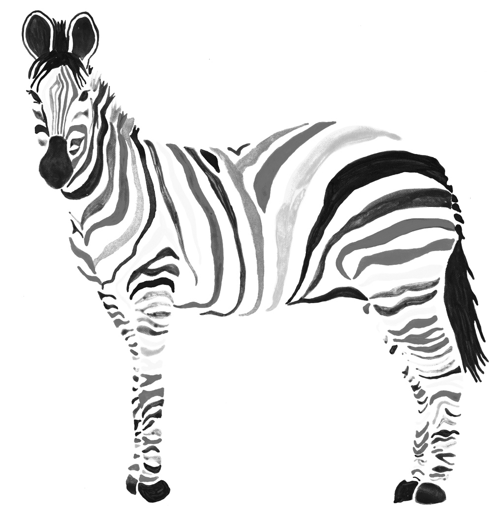 zebra print coloring pages zebra coloring pages to download and print for free print zebra coloring pages