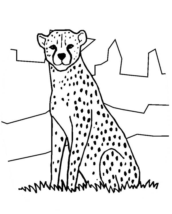 zoo map coloring page cheetah in the zoo coloring page netart coloring zoo map page