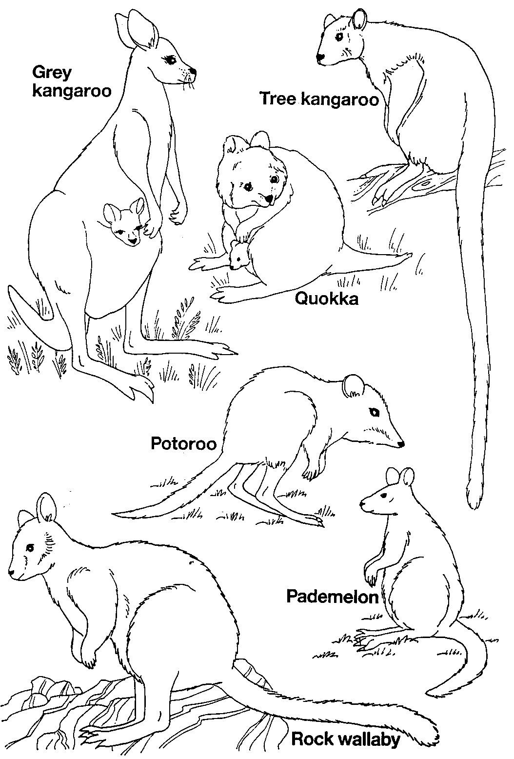 zoo map coloring page coloring page the zoo illustration for the children page zoo coloring map