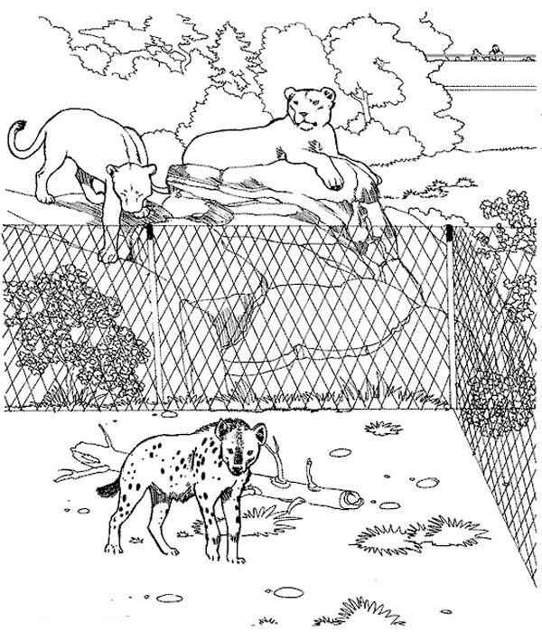 zoo map coloring page hyena in the zoo coloring page kids play color coloring map page zoo