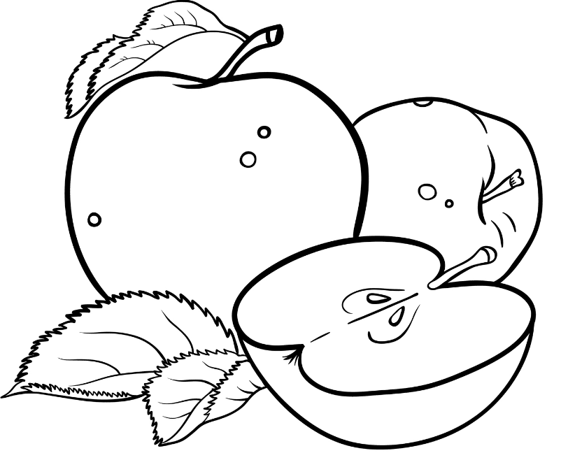 a apple coloring sheet the best apple printable roy blog coloring sheet apple a