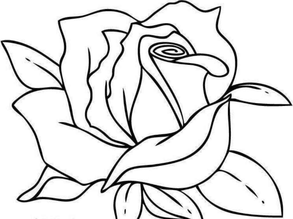 adult coloring pages roses coloring pages printable coloring pages roses colorine pages roses adult coloring