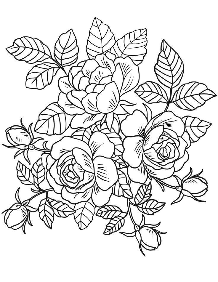 adult coloring pages roses floral coloring pages for adults rose coloring pages coloring roses adult pages