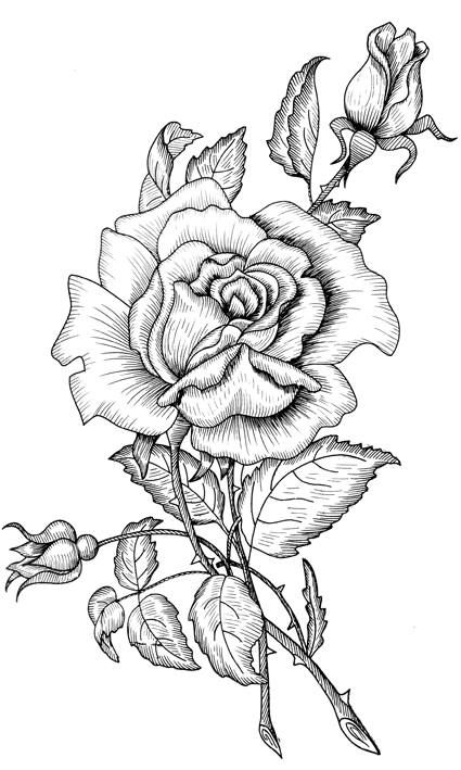 adult coloring pages roses heart with roses coloring pages getcoloringpagescom adult pages roses coloring