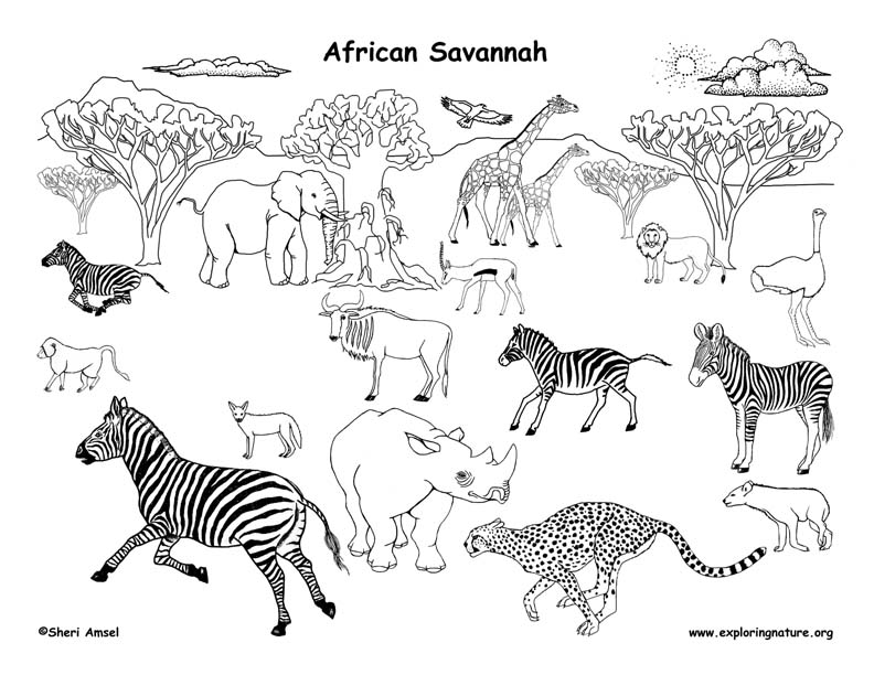 africa animals coloring pages african grassland animals labeled coloring nature animals africa pages coloring