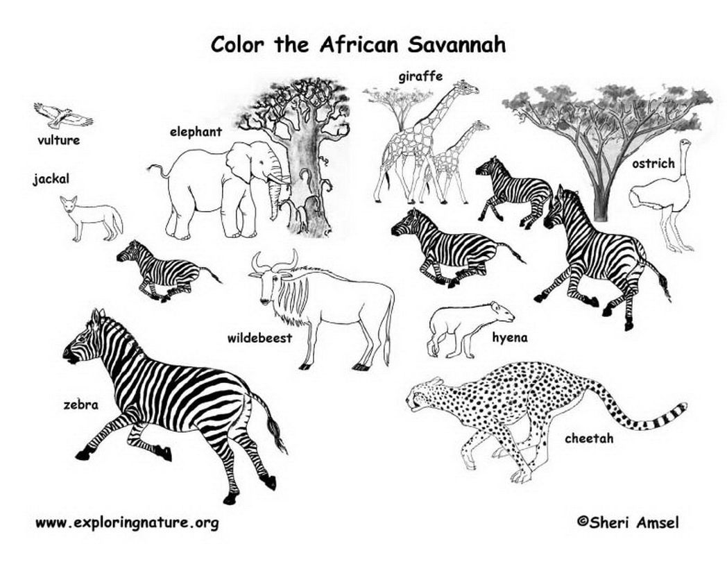africa animals coloring pages african safari animals coloring pages coloring home pages africa animals coloring