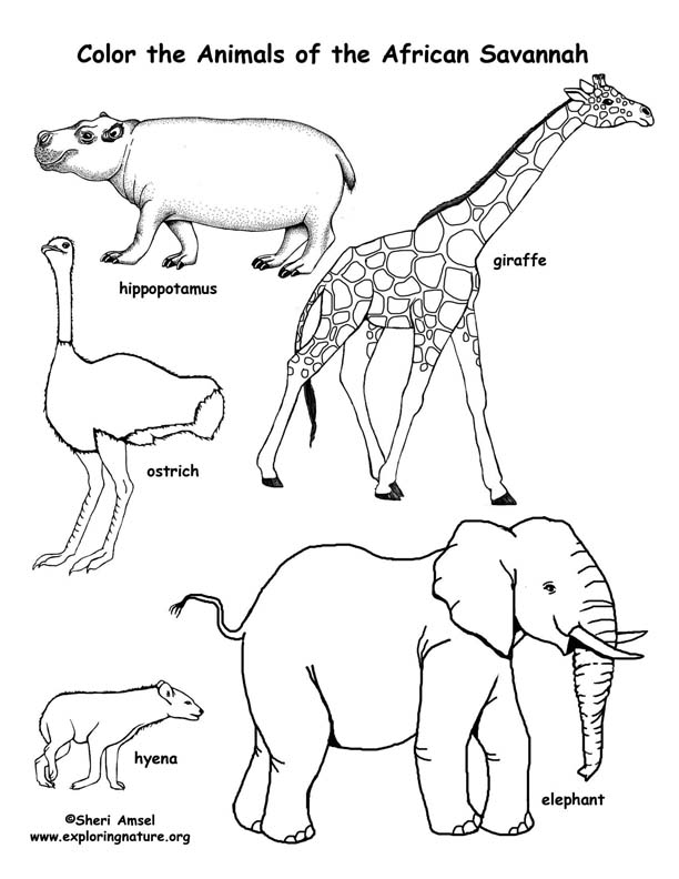 africa animals coloring pages free coloring pages for children of color non commercial pages animals africa coloring