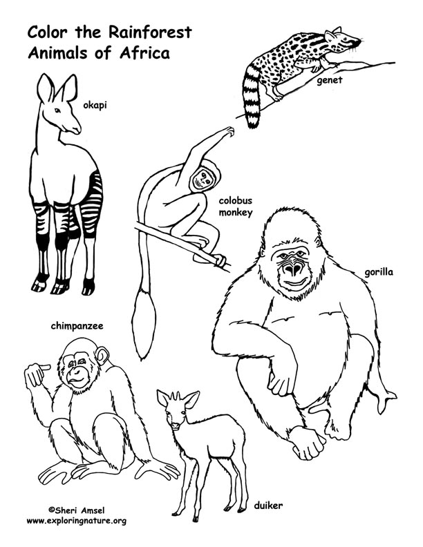 african animals printables african savanna coloring page at getcoloringscom free african printables animals