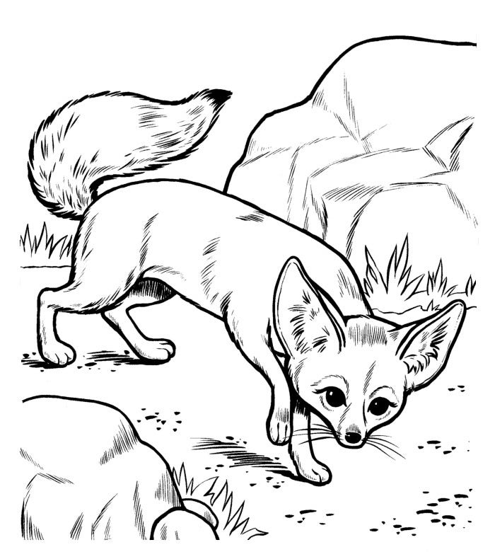 african animals printables set of cute african animals coloring page funny cartoon african printables animals