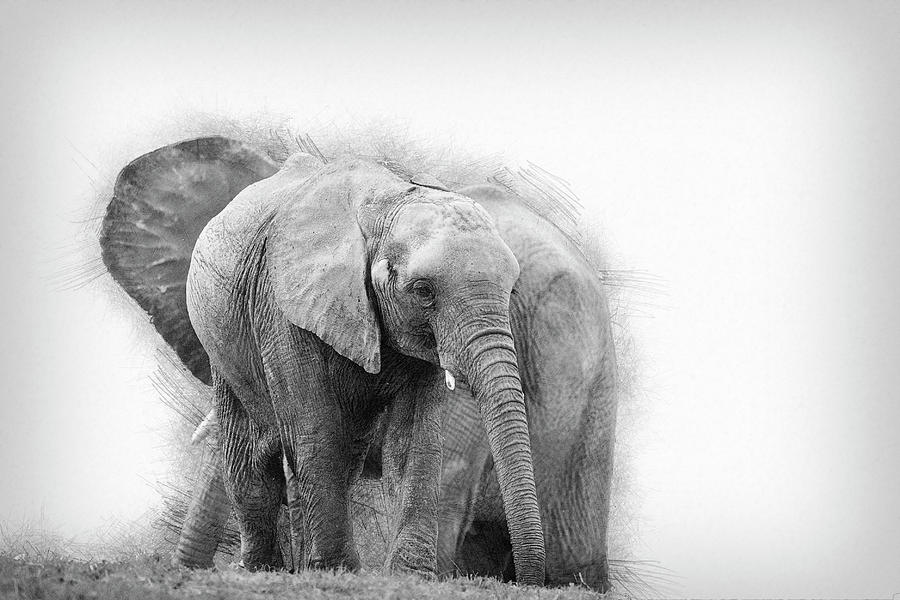 african elephant drawing 10 excellent elephant drawings for inspiration 2017 elephant african drawing