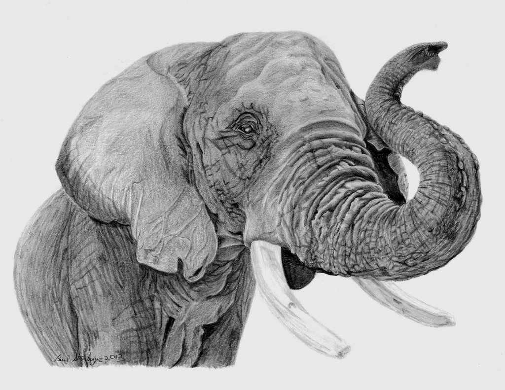 african elephant drawing 1000 images about elephants on pinterest elephant drawing elephant african
