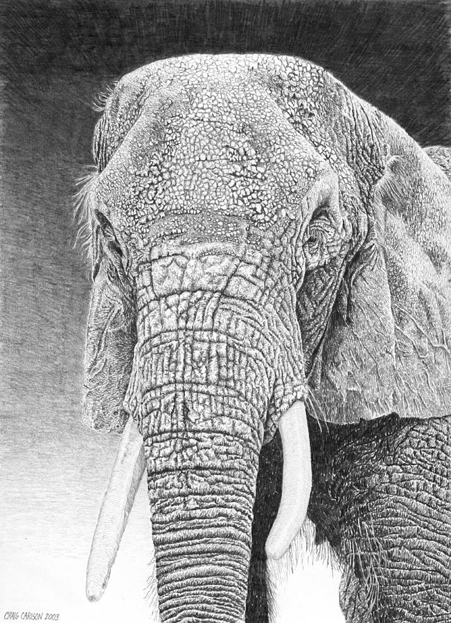 african elephant drawing 42 hd animal drawing wallpaper on wallpapersafari african drawing elephant