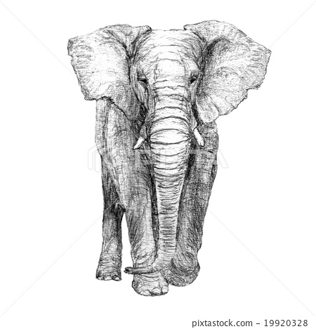african elephant drawing african elephant drawing free download on clipartmag drawing african elephant