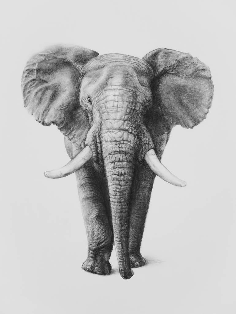 african elephant drawing african elephant in profile drawing by douglas hawks elephant african drawing