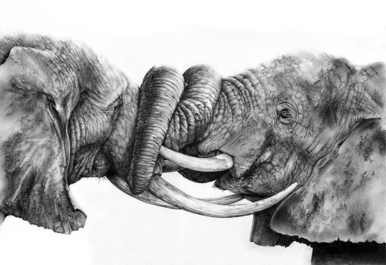 african elephant drawing charcoal drawings elephant bull 2013 135x114cm drawing african elephant