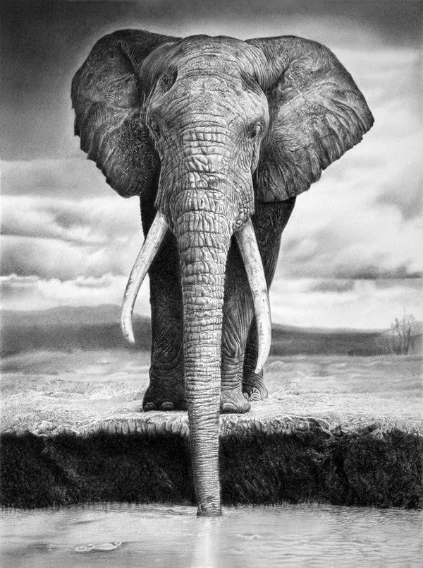 african elephant drawing elephant art pencil drawing print a3 a4 signed by artist african drawing elephant