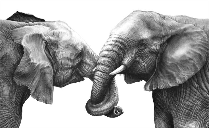 african elephant drawing elephant drawings 19 free premium download african elephant drawing