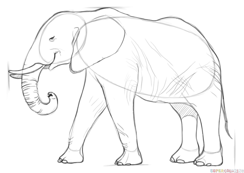 african elephant drawing elephant front view drawing at getdrawings free download african drawing elephant