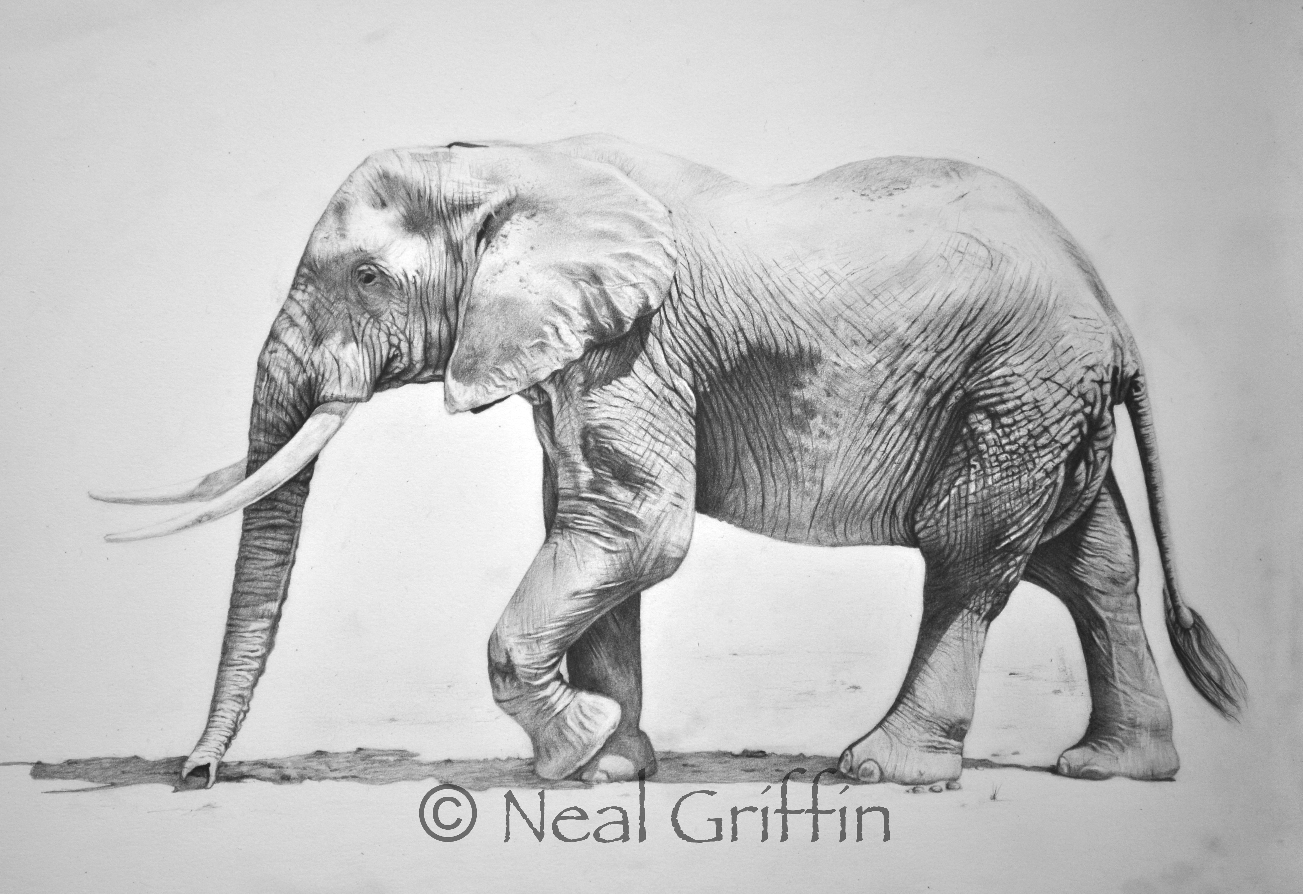 african elephant drawing elephant images for drawing at getdrawings free download african elephant drawing
