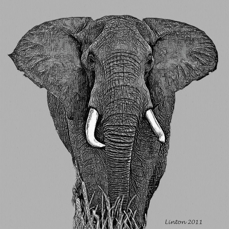 african elephant drawing greetings african elephant trunks and tusks peter williams drawing african elephant