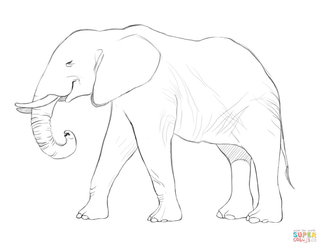 african elephant drawing how to draw an asian elephant elephant drawing african
