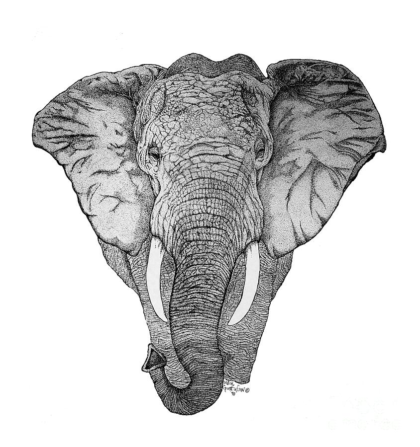 african elephant drawing pencil drawing sketch illustration of african elephant elephant drawing african
