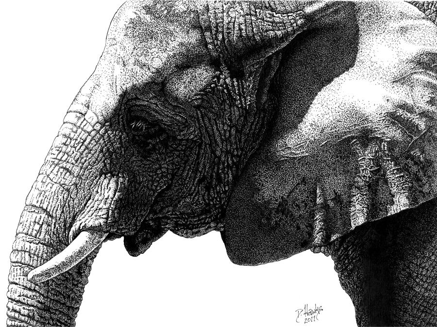 african elephant drawing the matriarch elephant drawing owen garratt pencil drawing elephant african