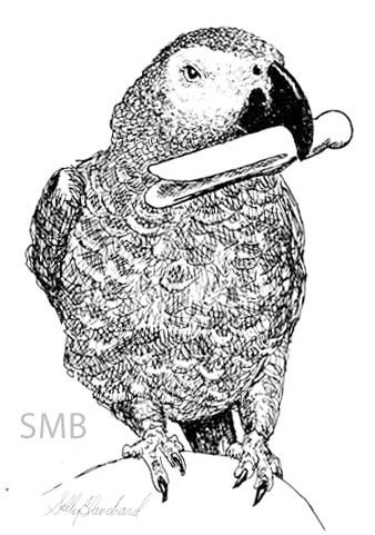 african grey drawing african gray parrot psittacus erithacus line art and african grey drawing