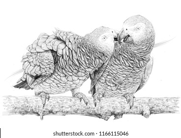 african grey drawing glade ict cool pencil realistic macaw drawing drawing grey african