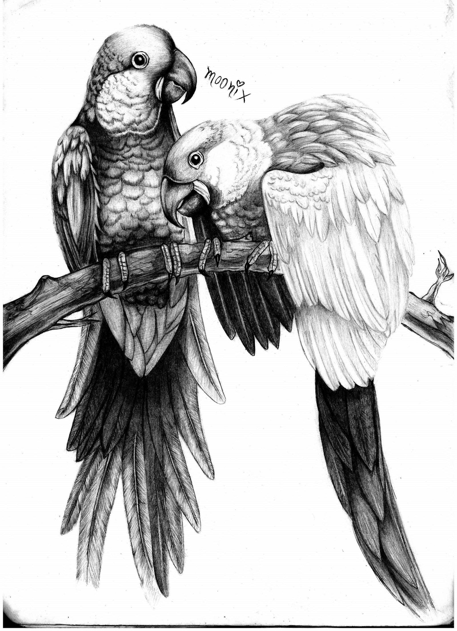 african grey drawing parrots drawing pencil by moonix 20 on deviantart drawing african grey